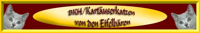 BKH- und Kartäuser-Katzen von den Eifelbaeren